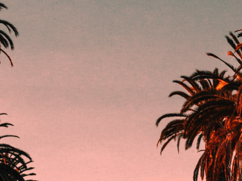 Palm trees at sunset in Hollywood.